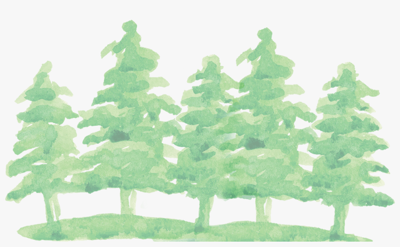 Watercolor Pine Tree Png Transparent Watercolor Christmas Tree Png