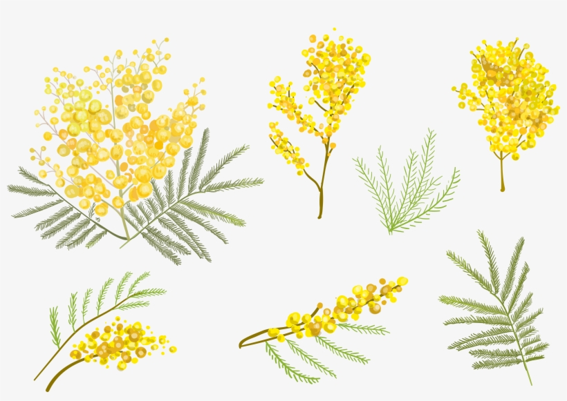 Flowers Vector Drawing Png: Goldenrod Drawing Watercolor