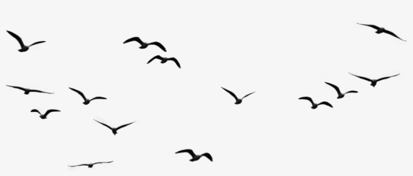 Birds Png Image1 - Birds Flying In The Sky Png - 1024x683 PNG