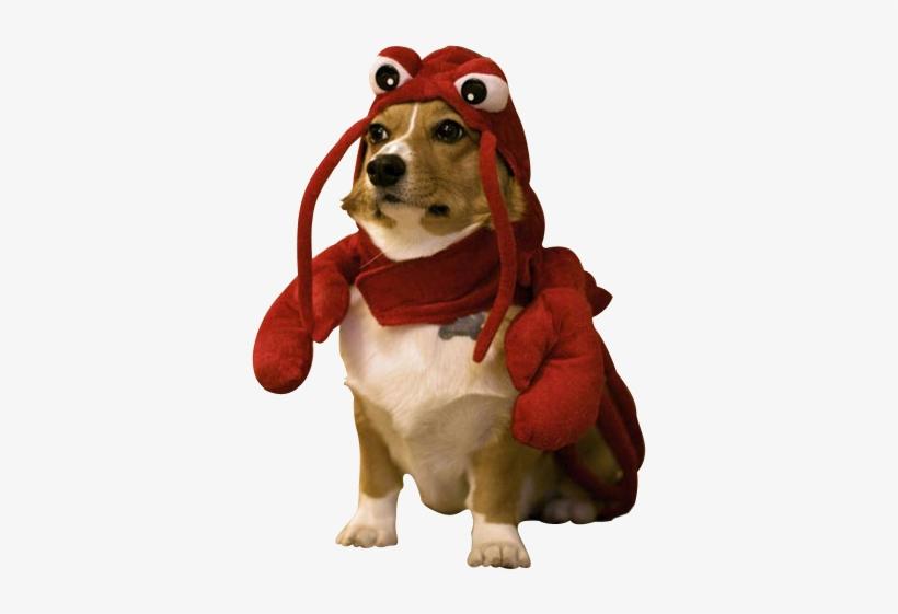 101-1018544_image-lobster-dog.png