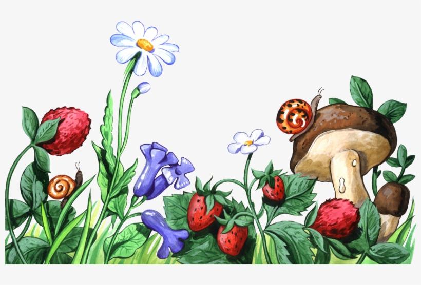 Картинки ягоды и грибы для детей по отдельности