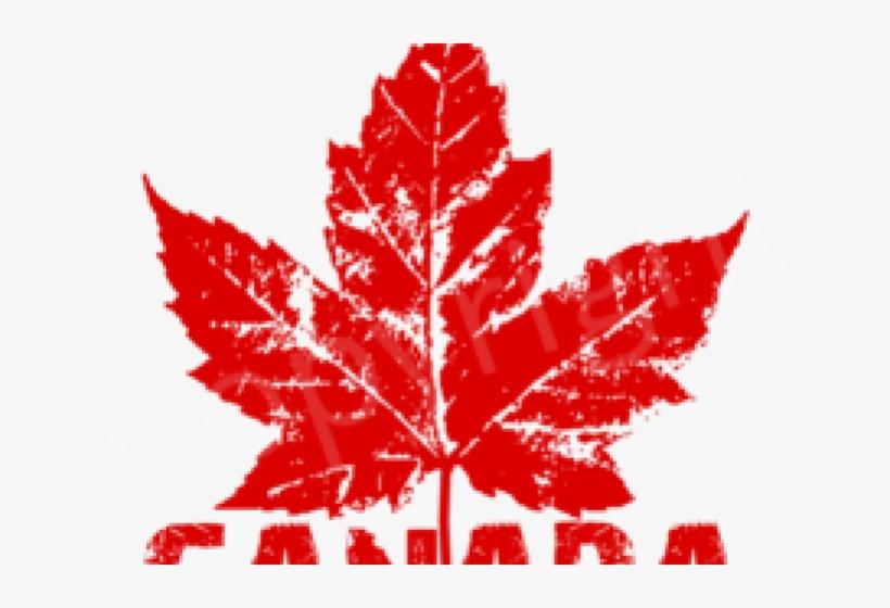 Canada Maple Leaf Png Transparent Images Canada Maple Leaf 640x480 Png Download Pngkit