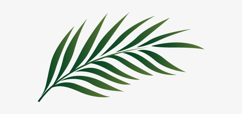 Palm Tree Leaf Clipart 19 1 Palm Tree Leaf Clipart 575x356 Png