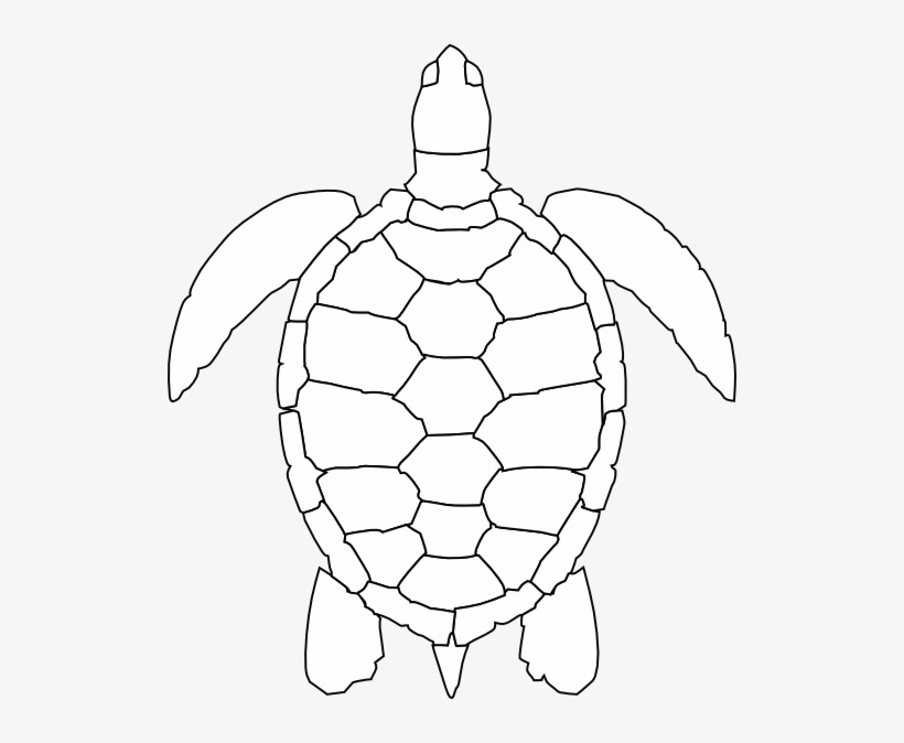 Turtle Shell Pattern Drawing 516x594 Png Download Pngkit