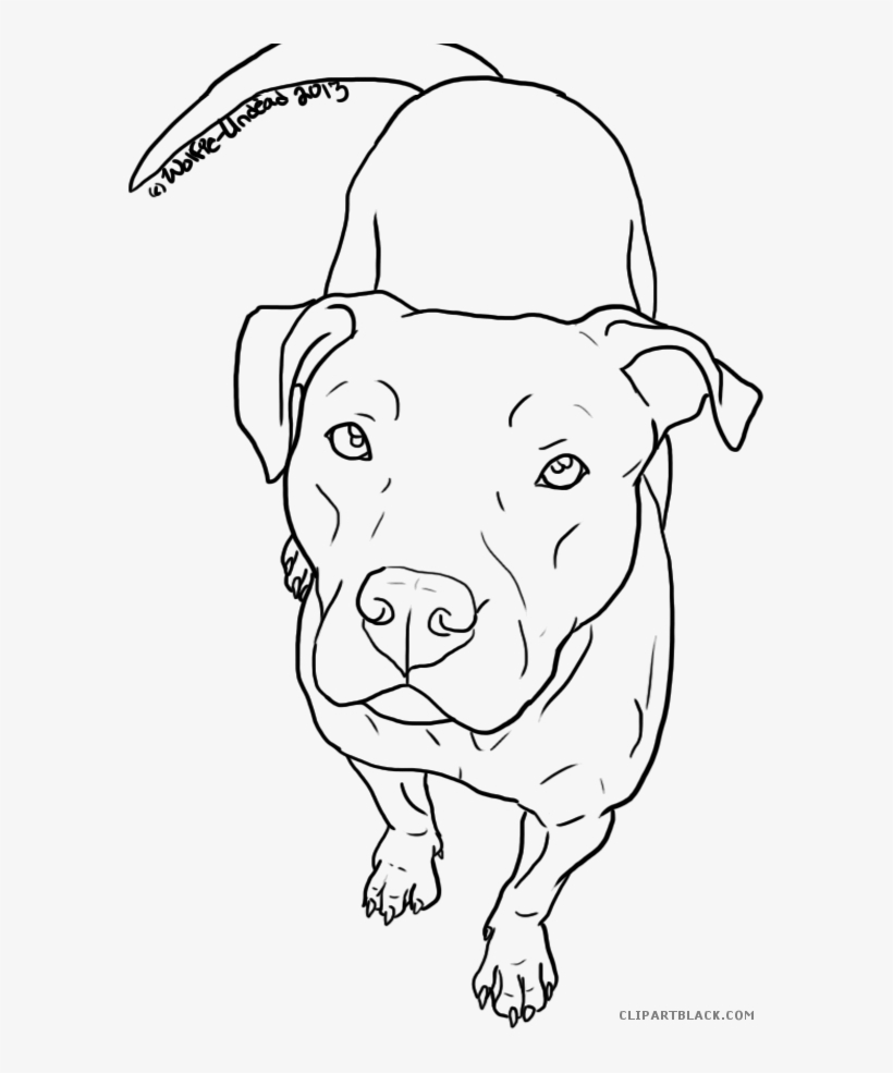 Clipartblack Com Animal Free Black White Images Easy To Draw Pitbull 585x905 Png Download Pngkit