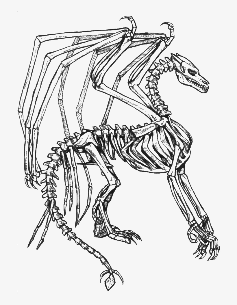 - Collection Of Free Skeleton Fantasy Download On - Coloring Pages