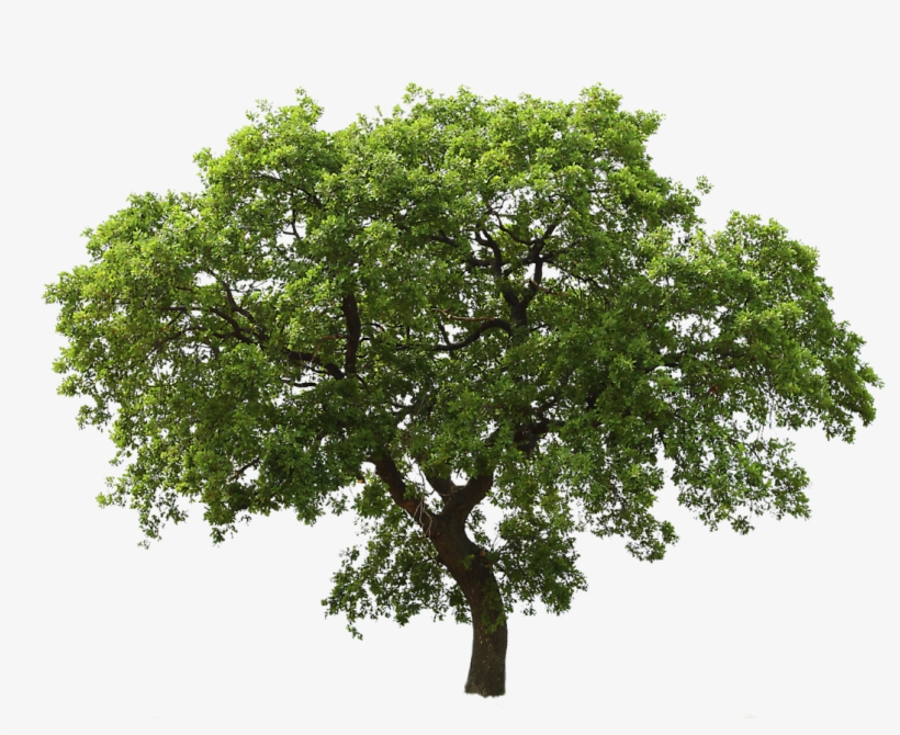 Tree Free Download Png Transparent Background Tree Clipart