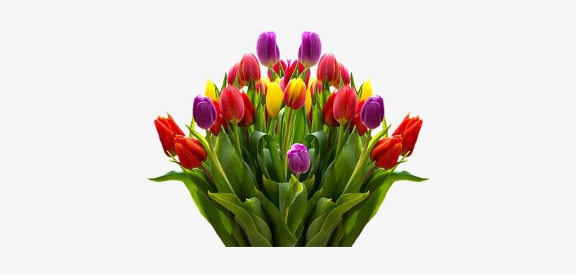 Lukisan Bunga Tulip Png Big Bouquet Of Beautiful Tulip 493x340 Png Download Pngkit