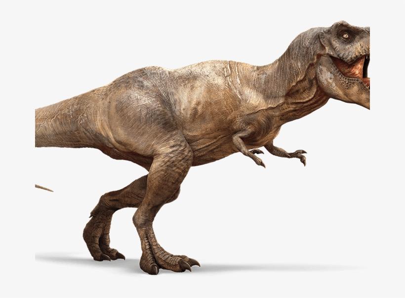 indominus rex wiki tyrannosaurus rex t rex wiki ark - imágenes del