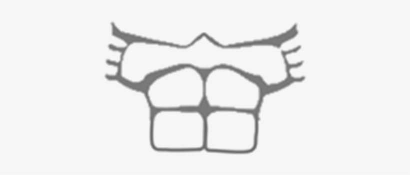 Download T Shirt Roblox Muscle T Shirt Template Full Size Png