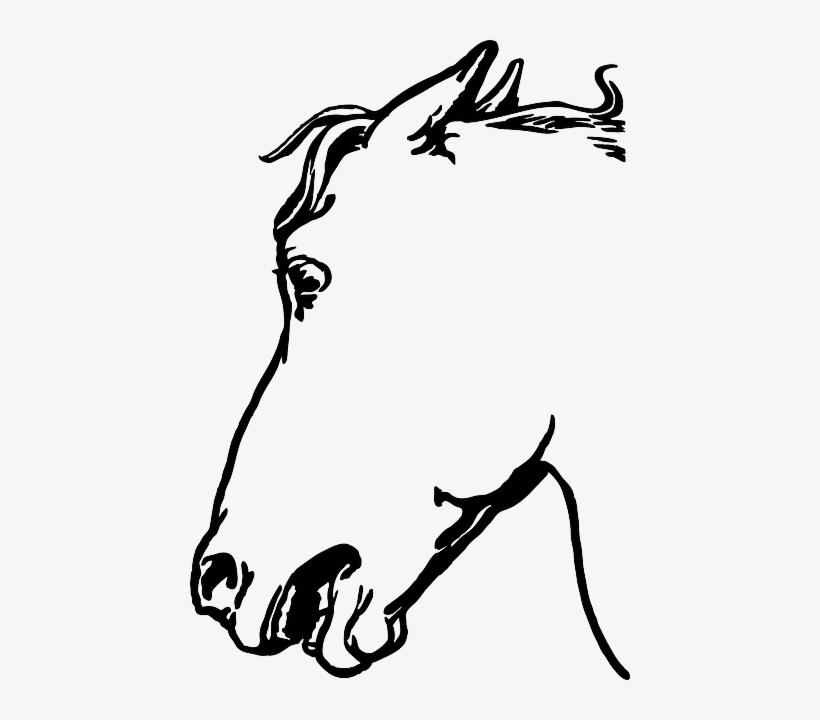 Mammal Animal Head Horse Mammal Gambar Sketsa Kepala Kuda