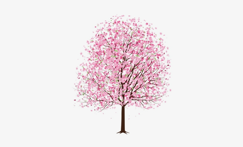 Cherry Blossom Tree Cherry Blossom Drawing Cherry Tree With Pink Flowers Drawing 495x495 Png Download Pngkit