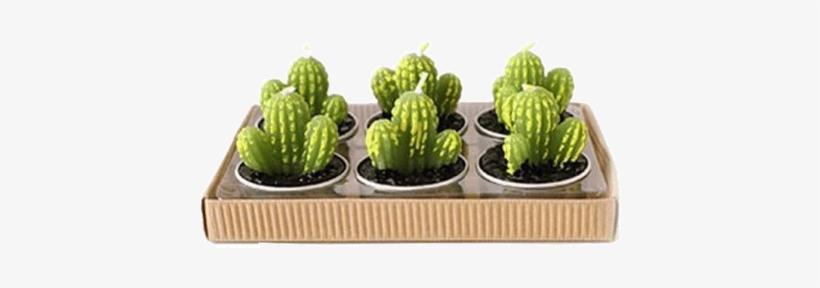 1f9d85bb Itgirl Shop Mini Cactus Set 6 Candles Aesthetic Apparel, - Group Cute  Cactus Shaped Green Cactus Mini Candles
