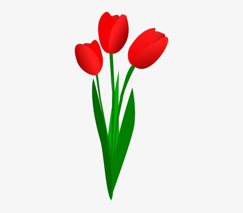 Stem Clipart Bunga Tulip Flowers Clip Art 320x640 Png Download Pngkit