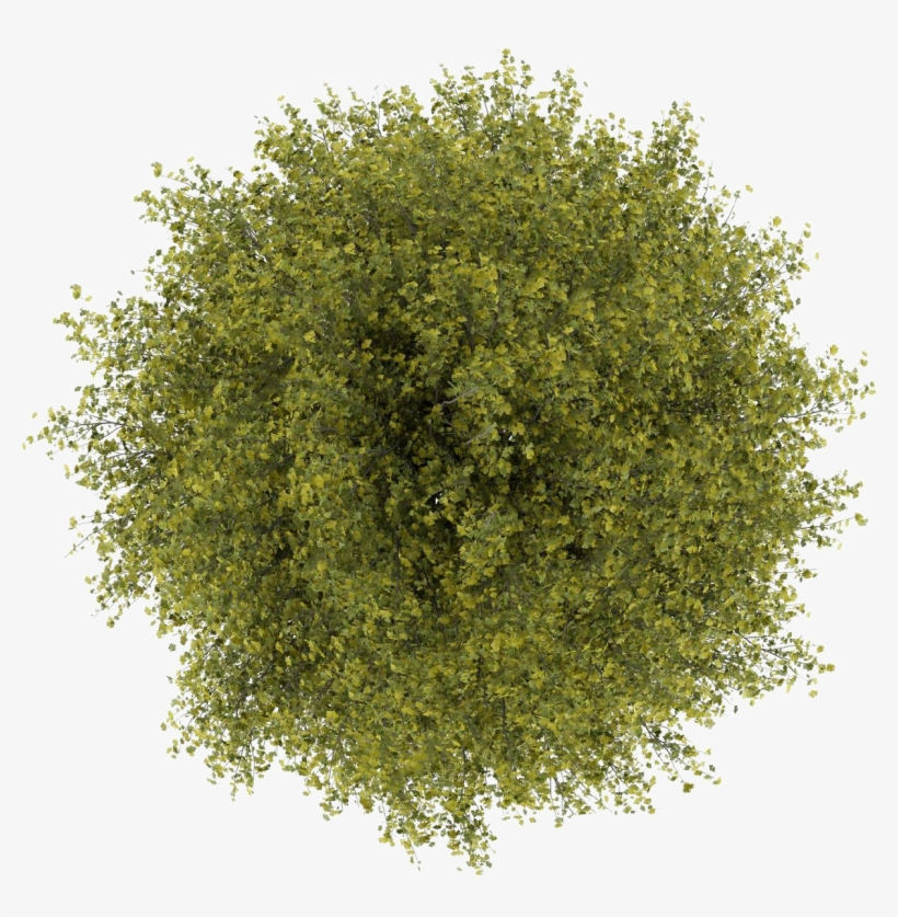 Trees Top View Png Clipart Transparent - Tree Top View Png ...