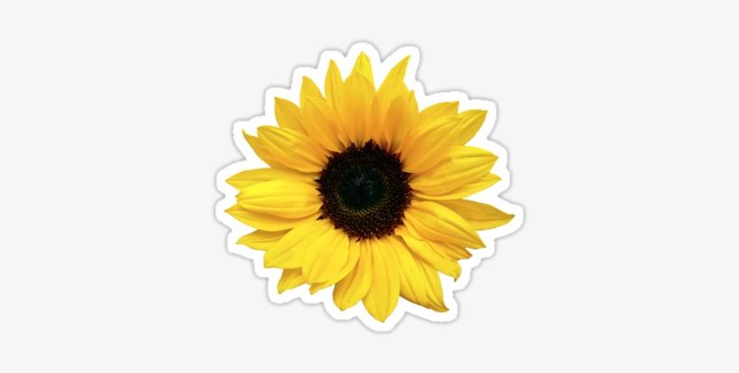 Freetoedit Sunflower Aesthetic Sticker Emoji - Aesthetic ...