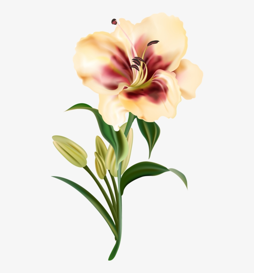 Clipart Download Amaryllis Drawing Realistic Chien Et Fleur Png 492x800 Png Download Pngkit