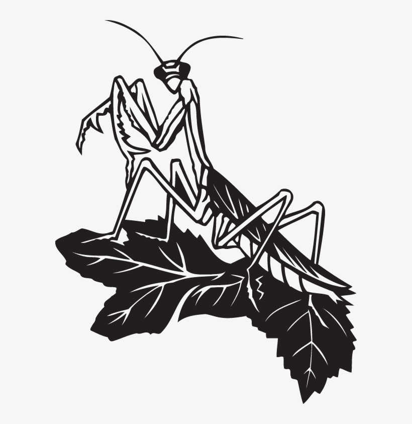 Black And White Praying Mantis