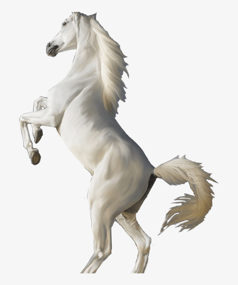 3d White Horse Standing Hd Wallpapers Download For White Horse