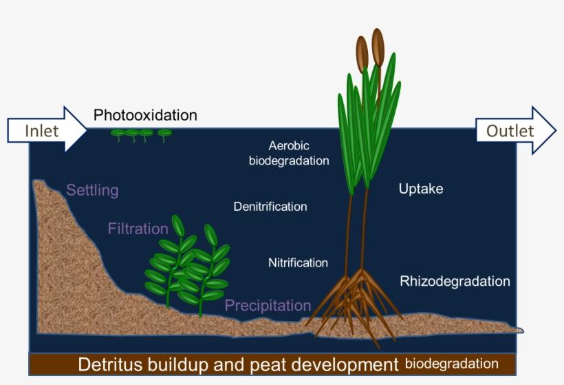 diagram of a wetland treatment system diagram of detritus wetland rh pngkit com wetland reactor diagram wetland ecosystem diagram
