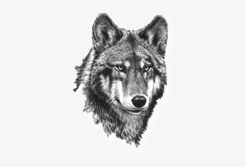 Wolf Clipart Picture Black And White Wolf Clipart Wolf Tete De Loup Tatouage 421x526 Png Download Pngkit