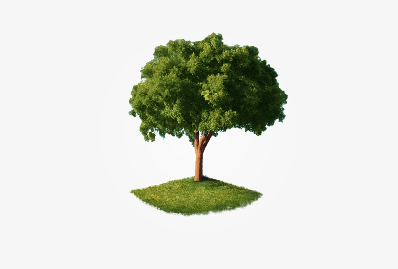 Home-tree - Tree Png Perspective View - 473x475 PNG Download