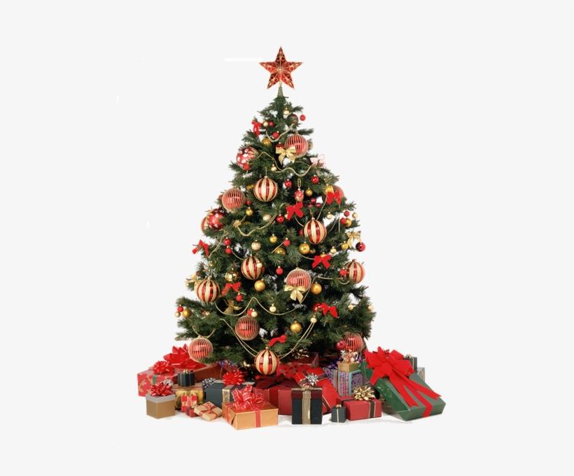 Sapin De Noel Real Christmas Tree Png 485x600 Png