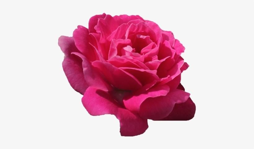 Pink Flower Tumblr Freetoedit Remixlt Rosa Flores Flor Flower