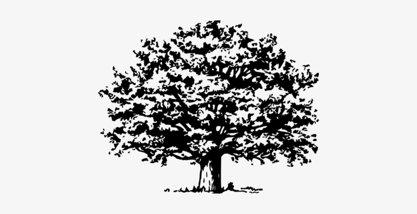 Branch Christmas Tree Drawing Computer Icons Tree Svg File Free 434x340 Png Download Pngkit