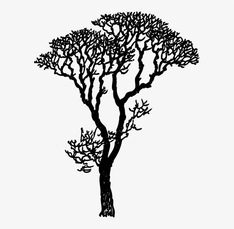 How To Draw A Mistletoe 25, Buy Clip Art