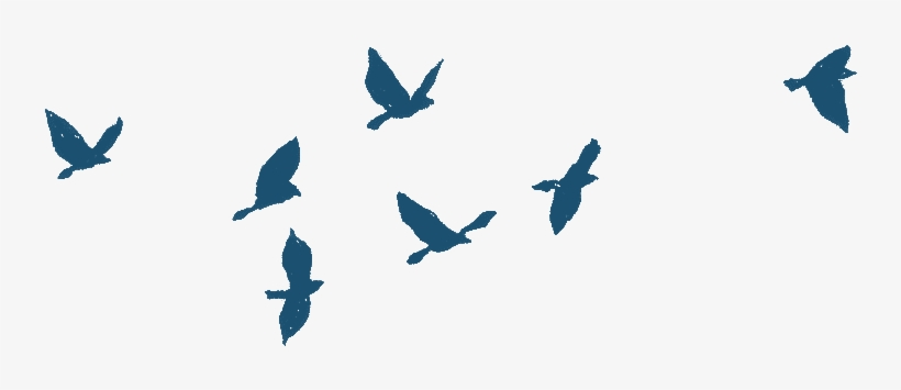 Bird Gif Png Bird Flying Gif Png 803x387 Png Download Pngkit