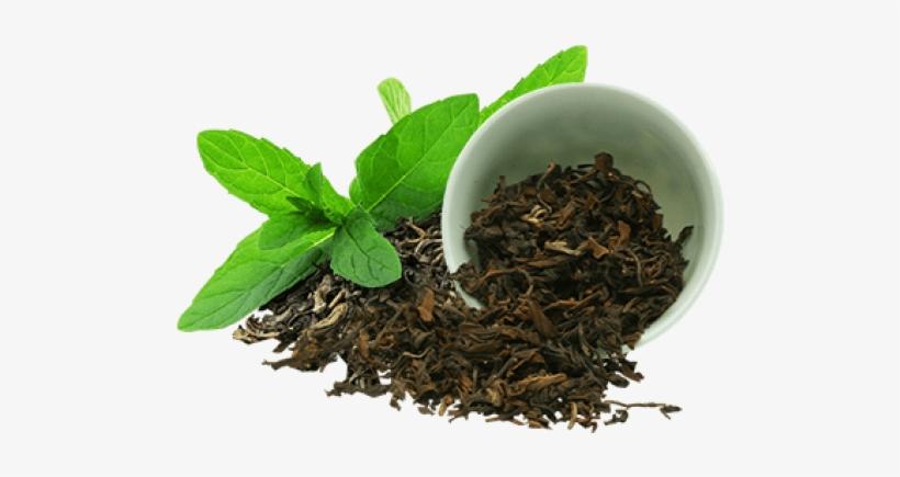 Green Tea Tea Leaves 500x500 Png Download Pngkit