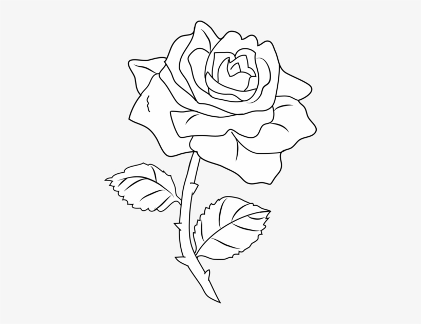 Free Pictures Of Roses To Color, Download Free Clip Art, Free Clip ... | 630x820