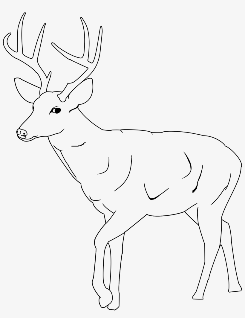 photo relating to Deer Printable called Drawn Buck Deer Antler - Printable White Tail Deer