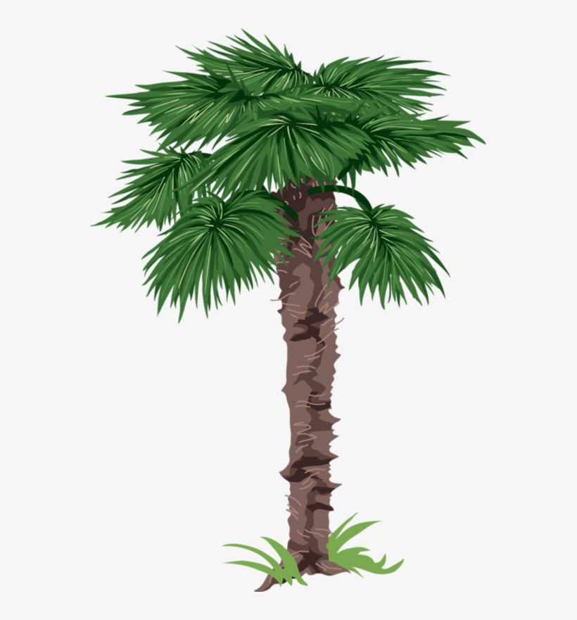 Tube Arbre Png Sabal Palm Clipart Png 563x800 Png Download Pngkit