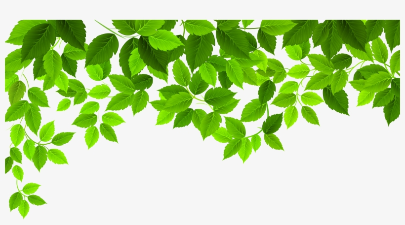 Spring Leaves Png 6500x3321 Png Download Pngkit It's all up to you. spring leaves png 6500x3321 png
