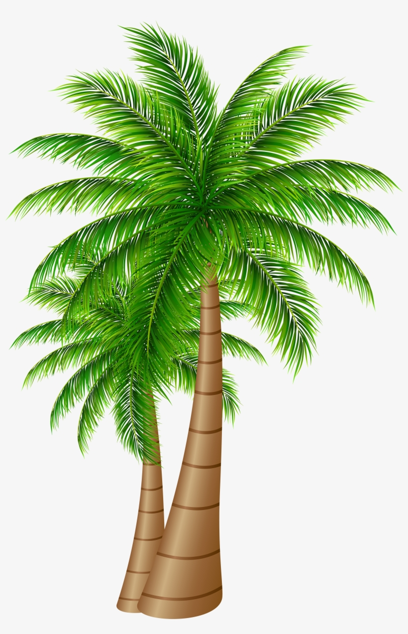 Palm Tree Clipart Transparent Png Date Palm Tree Png 3322x5000