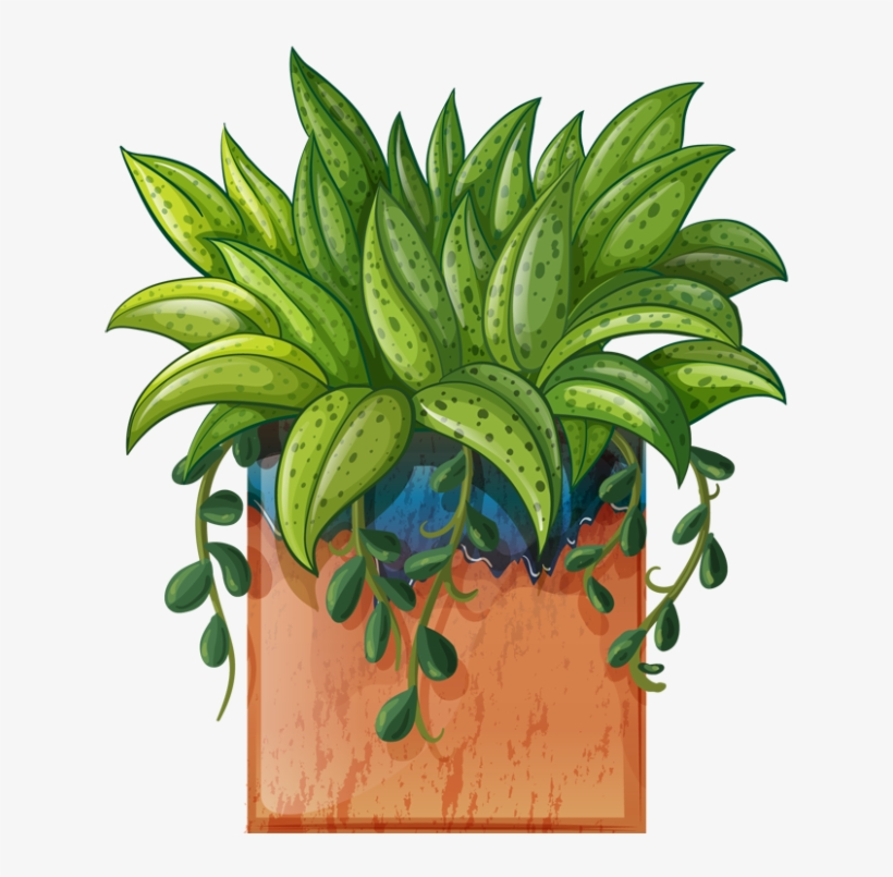 Pot Plant Clipart Beautiful Flower Pencil And In Color Transparent Potted Plants Clipart Hd 640x727 Png Download Pngkit