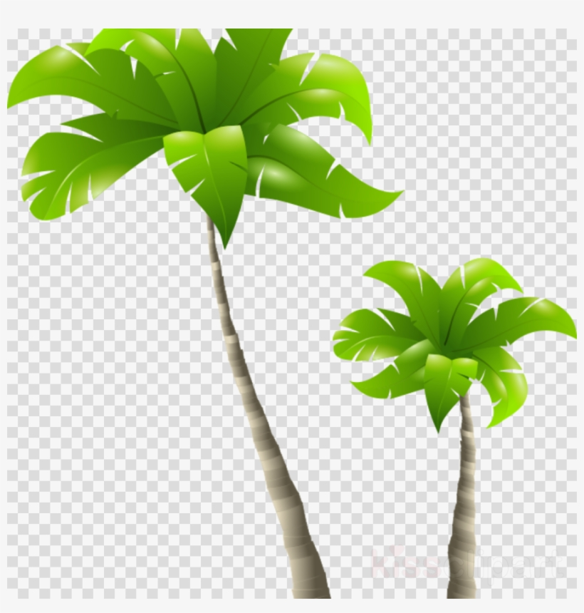Free Palm Tree Png Clipart Palm Trees Clip Art 900x900 Png Download Pngkit
