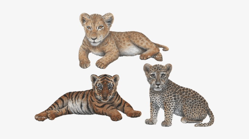 Leopard Transparent Jungle Animals Lion Cub Wall Decal Home