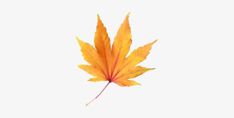Leave Fall Aesthetic Freetoedit Maple Leaf 1024x1024 Png Download Pngkit