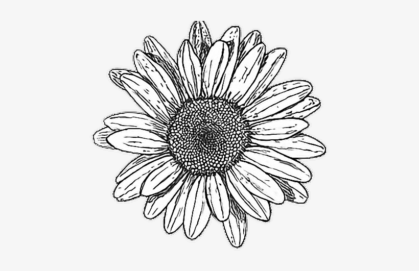 Flowers Vector Drawing Png: Tumblr Drawing Hipstergirl Myedit
