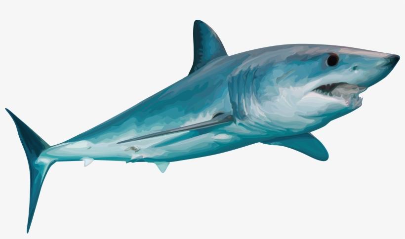 5b09cc85 Teespring - Tiger Shark - 3335x2585 PNG Download - PNGkit