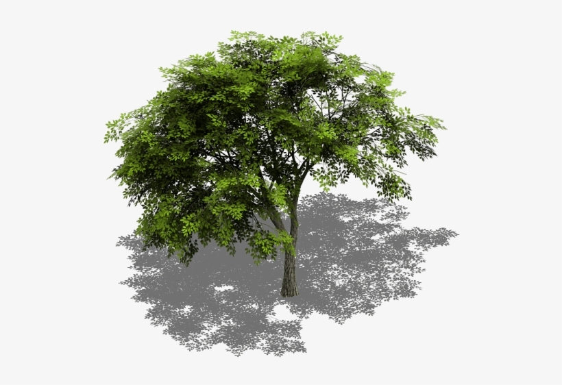 Preview - Tree Model Cinema 4d Free - 591x545 PNG Download