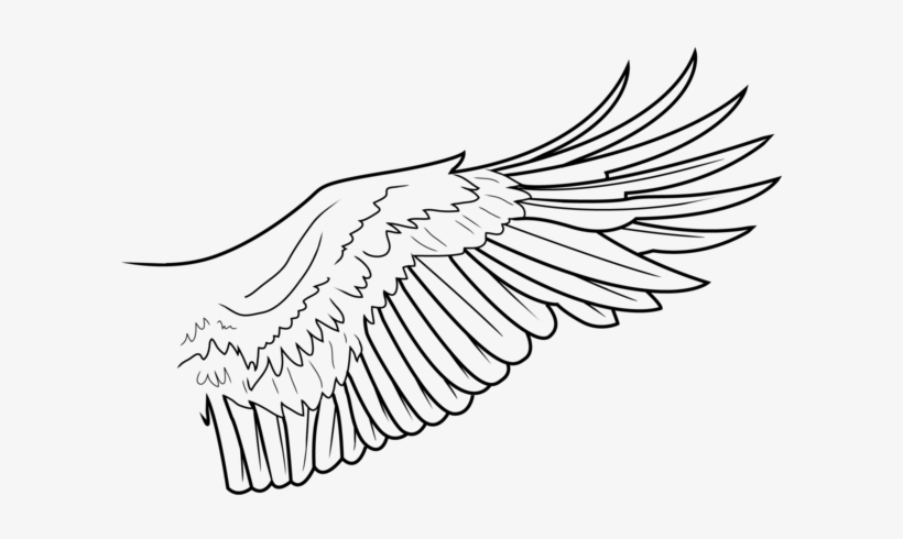 download simple wing lines by freakzter eagle wings line drawing full size png image pngkit by freakzter eagle wings line drawing