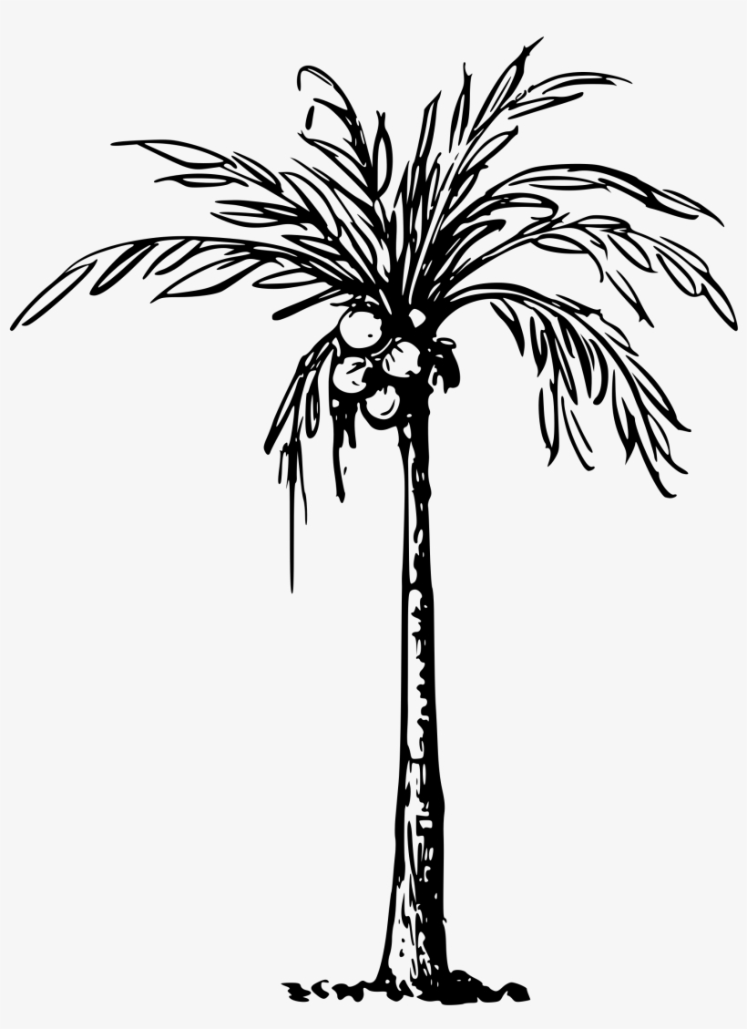 Coconut Palm Svg Black And White Download Clip Art Of Coconut Tree