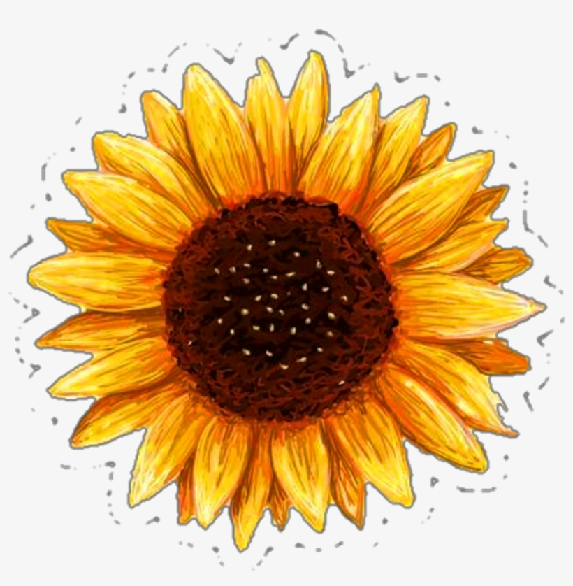 photograph about Printable Pictures of Sunflowers known as Printable Sunflower Sticker - 1024x1122 PNG Down load - PNGkit