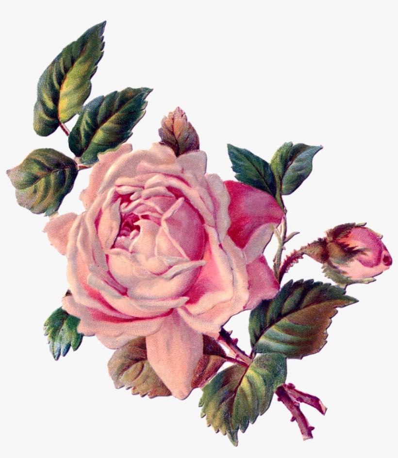 Vintage Roses, Vintage Floral, Rose Art, Vintage Images