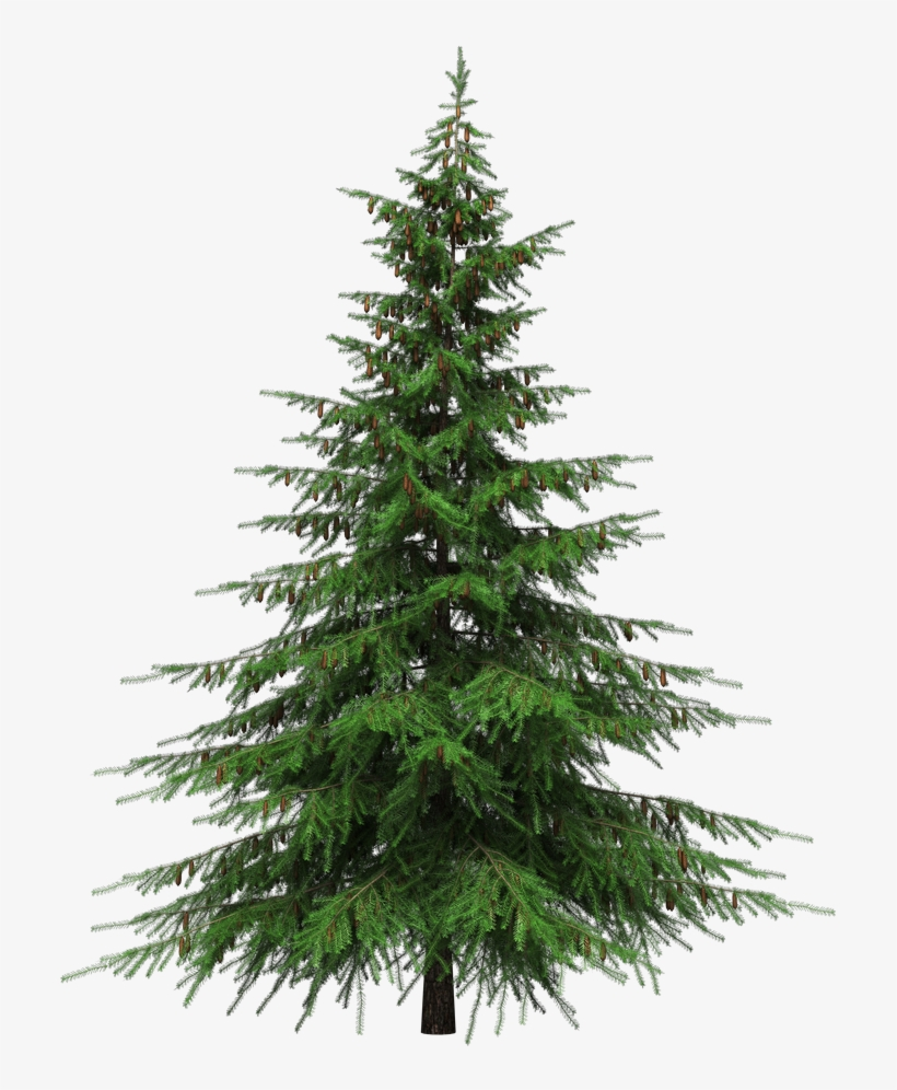 Real Christmas Tree Png Natural Cut Artificial Christmas Trees 925x1000 Png Download Pngkit