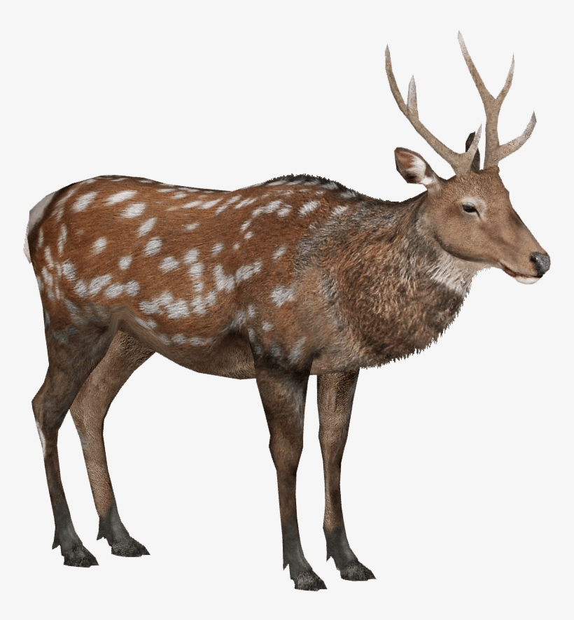Sika Deer Lgcfm Zt2 Library Wiki Fandom - Forest Animals Png